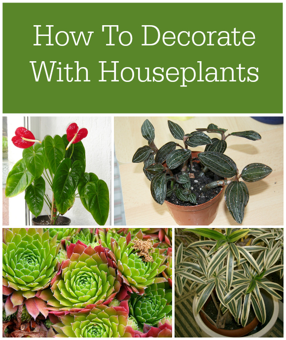 Decorating With Houseplants - How To Decorate With Houseplants #EbayGuides